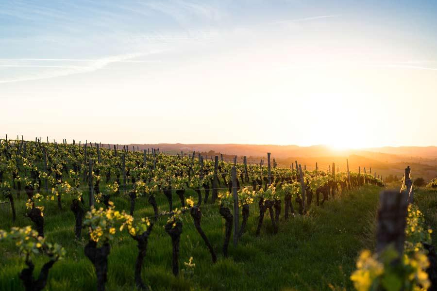 Comfort travel solutions. Wine & cava private tours